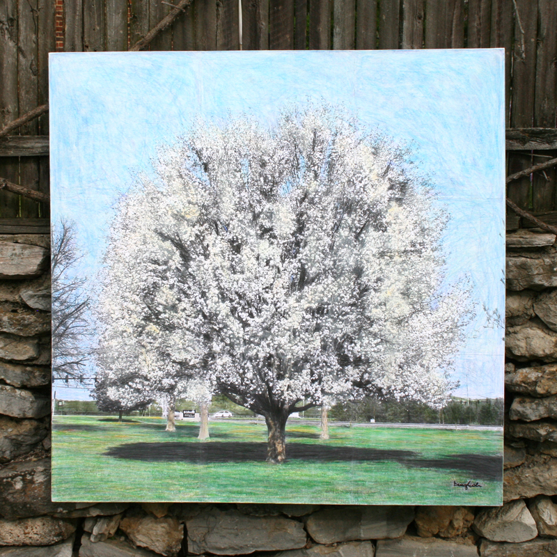 Spring is Here Bradford Pears Arrive in Nashville beth inglish artist binglishart.com